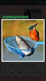 в сачке лежит рыба и рядом с птица с намерением