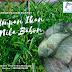 Teknik Mancing Ikan Nila Babon Menggunakan Umpan Rumput AMPUH!