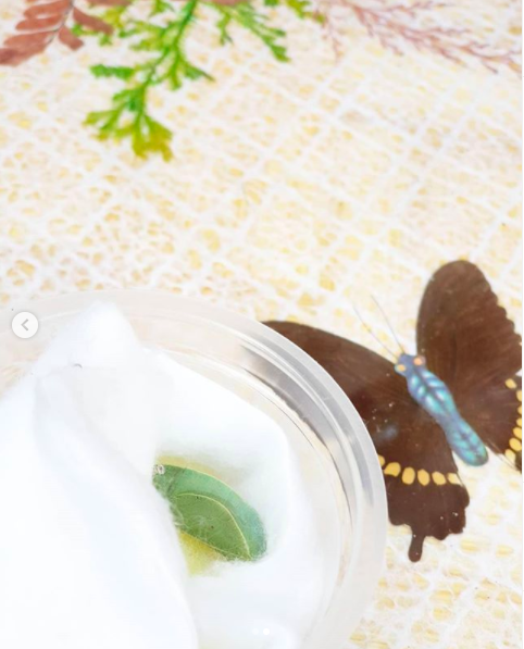 adopt melaka butterfly farm sanctuary