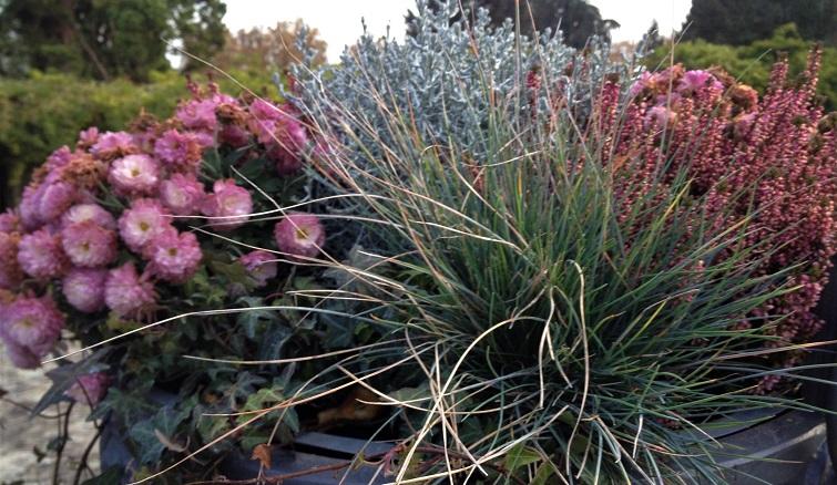 Herbstbepflanzung für Töpfe und Balkonkasten