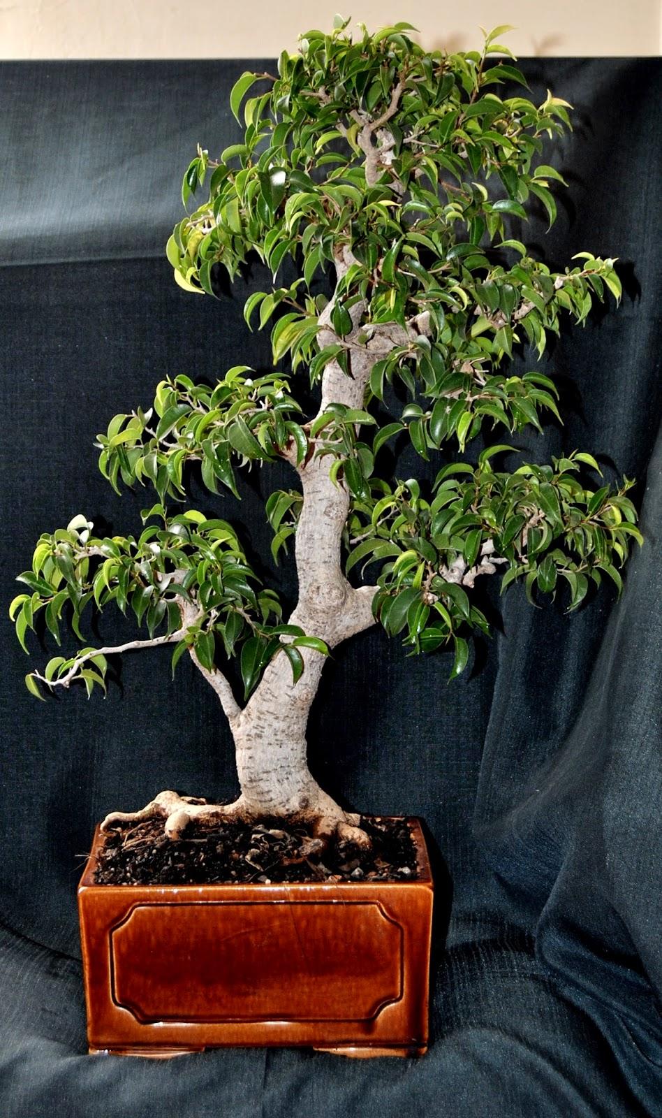 Planta care ar trebui sa fie in fiecare casa. Medicii o recomanda - Extra News