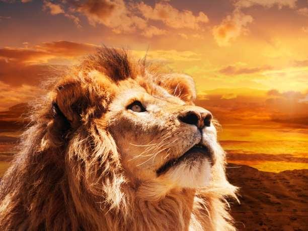 Υπήρξαν λιοντάρια στην Ελλάδα και γιατί εξαφανίσθηκαν;