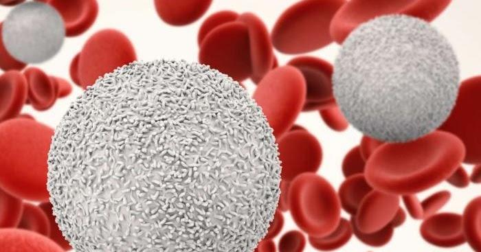 Waspadai Faktor Penyebab Kanker Darah! - Indonesiaku