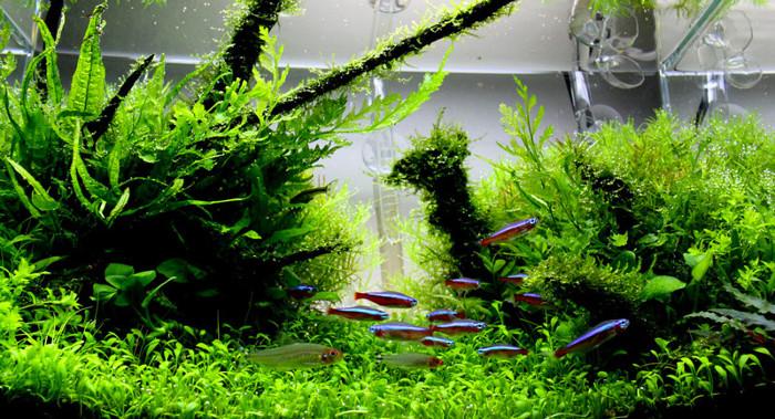 Paling Keren 30 Pemandangan Alam Untuk Aquascape - Foto ...