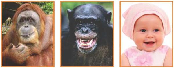 (Albert Einstein 2017) O orangotango, o chimpanzé e a espécie humana apresentam grande semelhança bioquímica