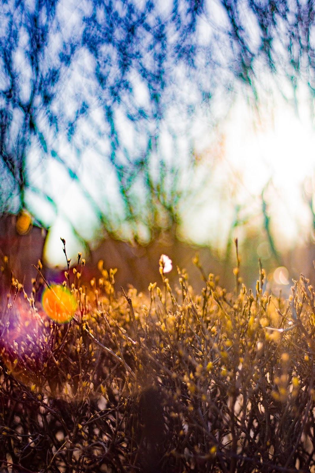 весна цветение тепло природа парк Питер солнце