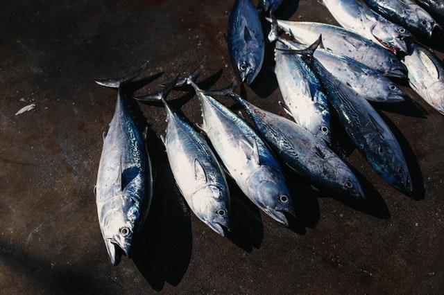 health benefits of sea fish