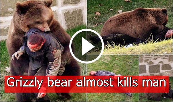 DEKHO PAKISTANI: Grizzly bear almost kills man