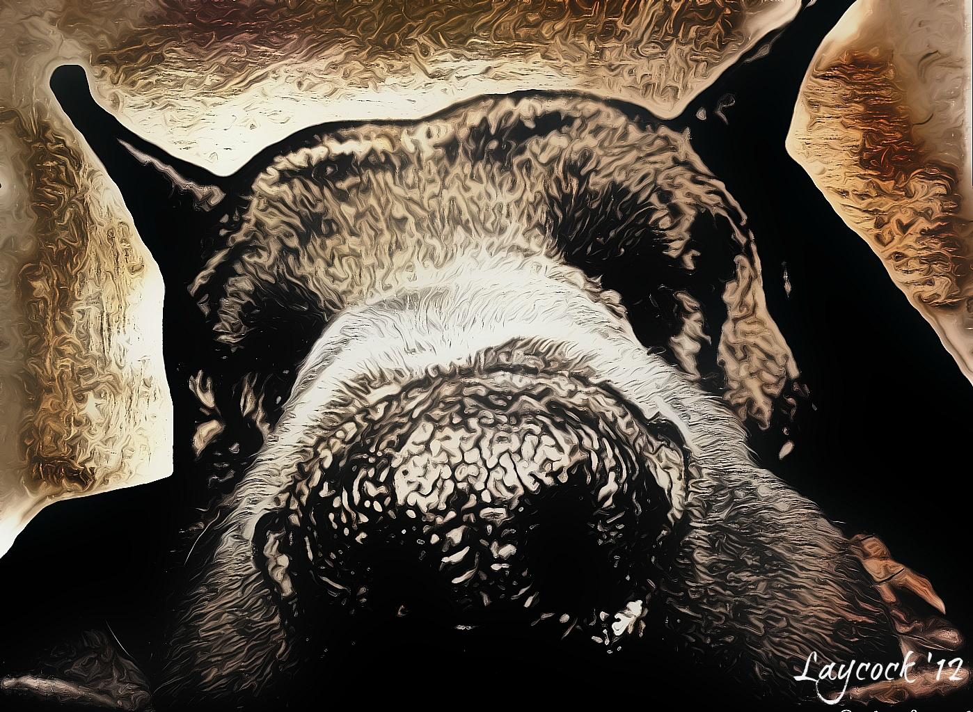 Goliath: Fur Real Pet Portraits - artography by Jodi Laycock