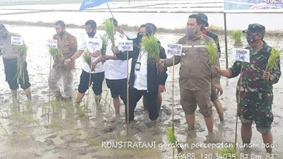 Wabup Bone Bersama Staf Ahli Mentan RI Tanam Padi di Desa Tulungeng