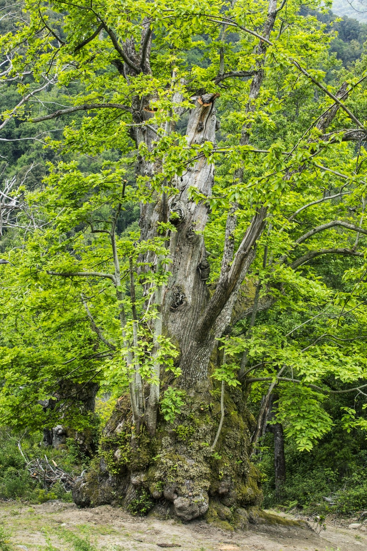 arbre corse de l'année