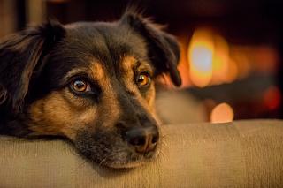 cães idosos e sua recuperação