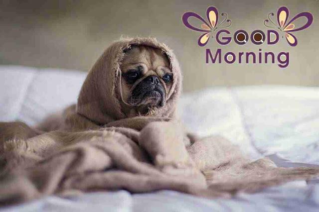 funny good morning image of dog