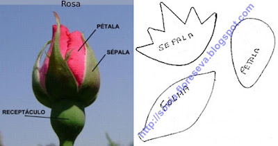 molde flor rosa eva