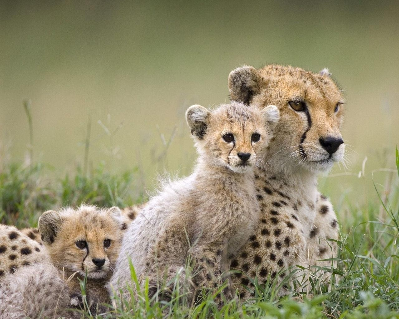 Beautiful Animals Safaris Safari Amazing Beautiful: Encyclopaedia Of Babies Of Beautiful Wild Animals: Mara