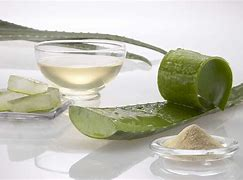 Aloe Vera Juice Benefits Hindi | एलोवेरा क्या है?