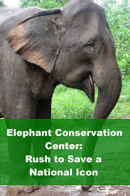 Elephant Conservation Center: Rush to Save a National Icon