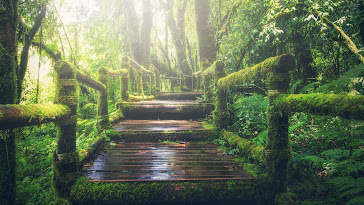 A wooden walkway in a Kampala park, covered in moss, ferns, and trees.