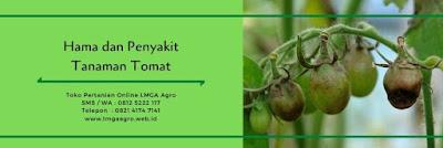 tomat adella, cara menanam tomat, jual benih tomat, toko pertanian, online shop, lmga agro