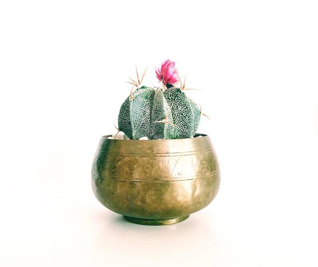 macetero en oro viejo con cactus