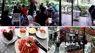 KHM strawberry cameron highland