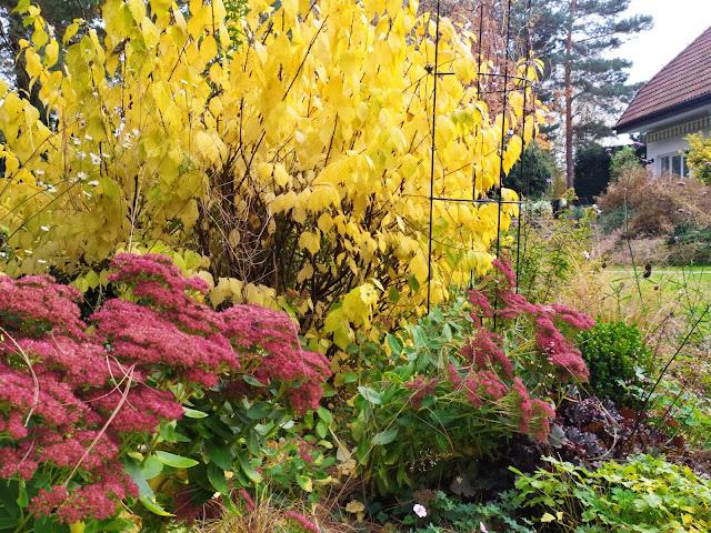migdałek jesienią
