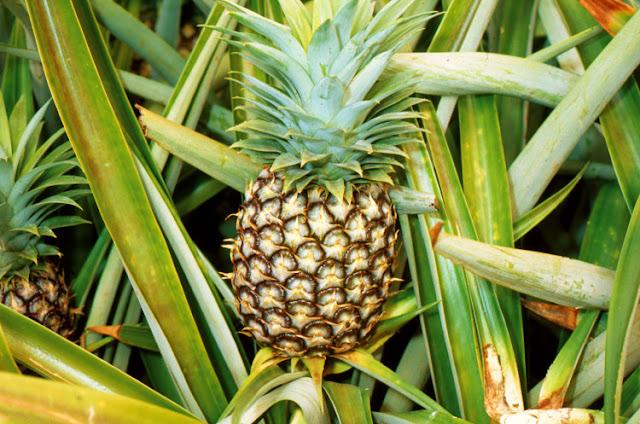 ananas ke fayde