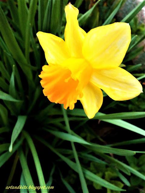 Está quase a chegar... com a sua força vitalizante, encanto e espírito de renovação, fazendo-nos crer que cada dia vale a pena... a Primavera!... / It's almost here... with it's vitalizing force, enchantment and spirit of renewal, making us believe that every day is worth while... It's Springtime!...