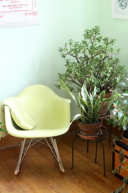 jade plant, snake plant, begonias, houseplants, indoor garden, Anne Butera, My Giant Strawberry