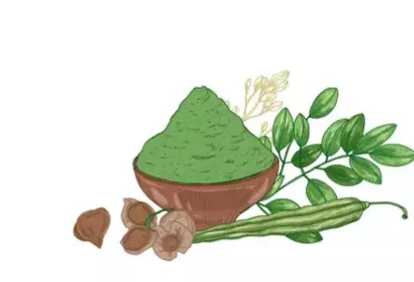 خمسة أسباب لتضمين المورينجا في نظامك الغذائي