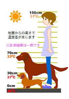 temperatura de piso para cães