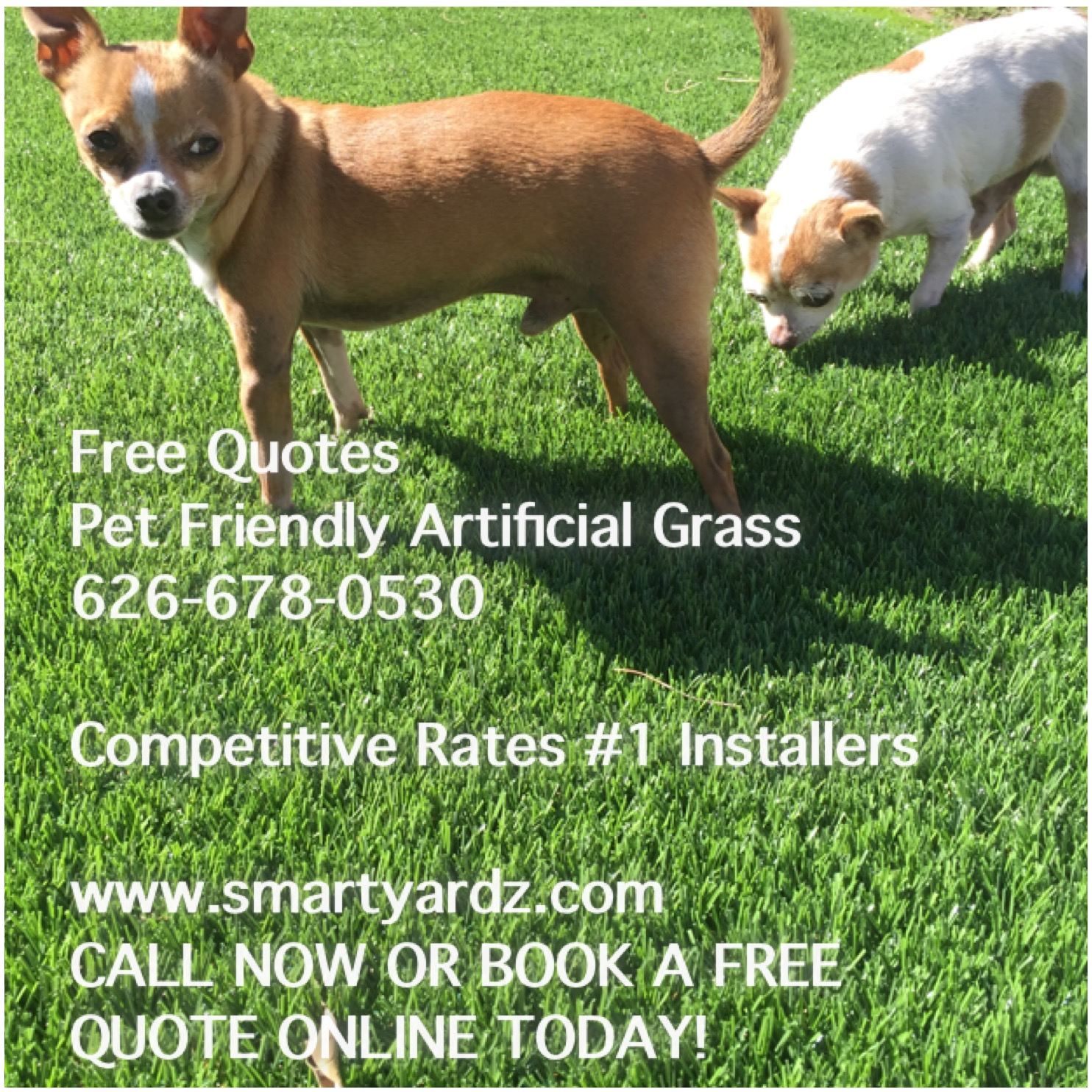 artificial grass for pets. Pet Friendly Artificial Grass By Smart Yardz - Los Angeles / Rancho Cucamonga For Pets