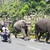 Ke Mana Kotoran Gajah Gembira Loka Dibuang?