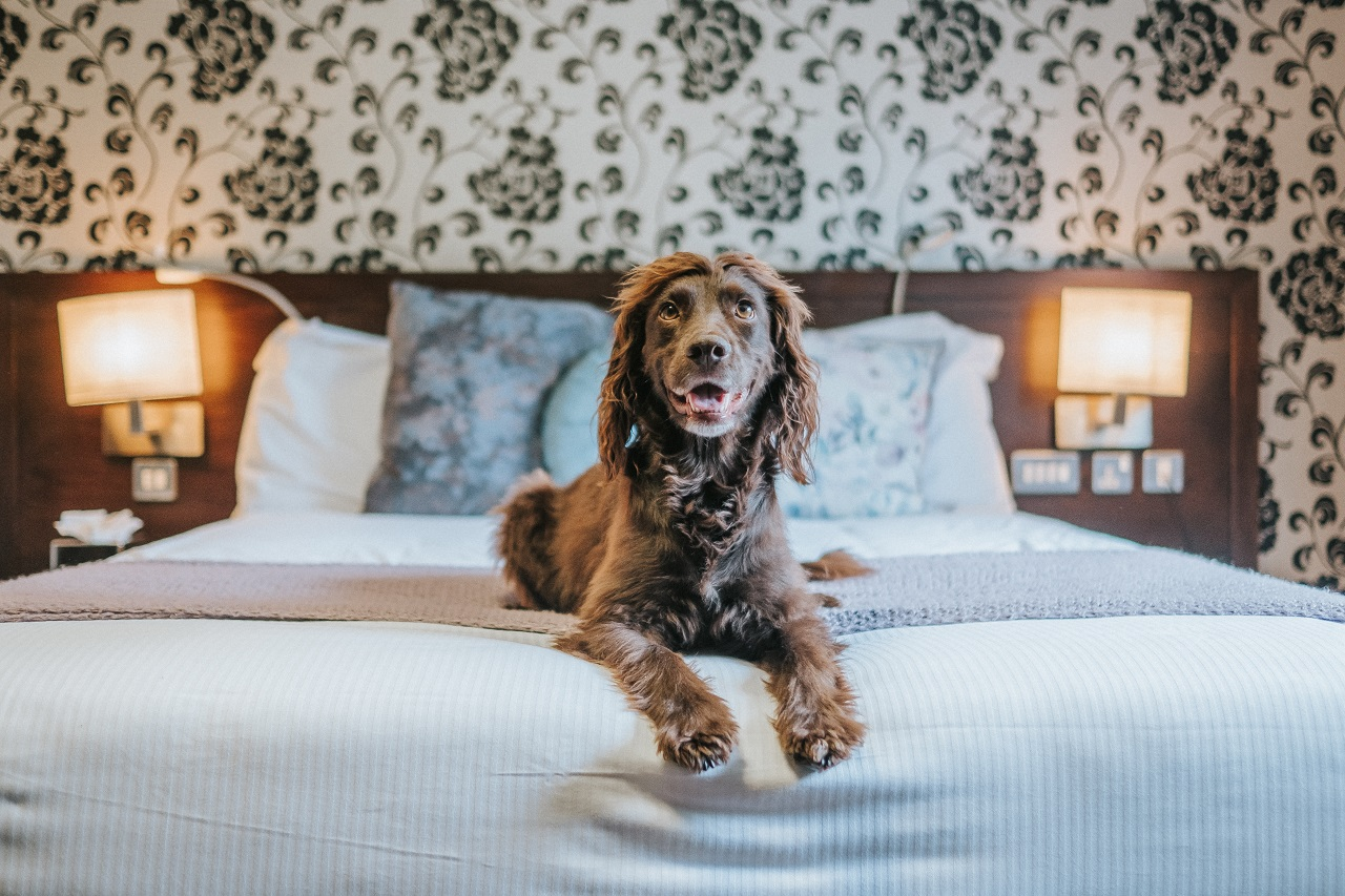 The Hampshire Hog; Dog Friendly Pub with Bedrooms