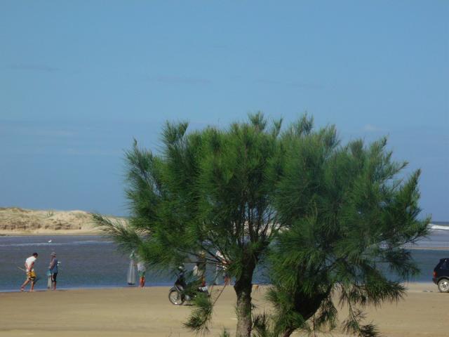 Não Posso Resolver As Coisas: O Excêntrico Olhar De Antônia...: Praias Do Sul De Santa