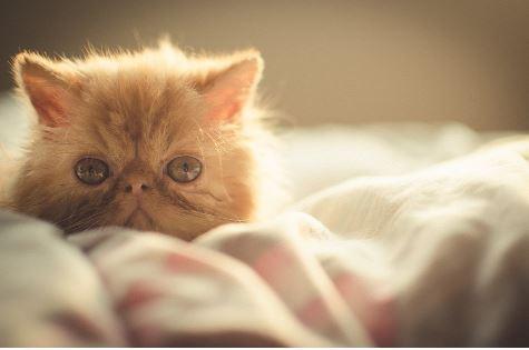 Kucing yang Menyayangi Pemiliknya