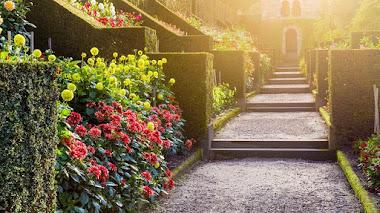 The Dahlia Walk en los jardines de Biddulph Grange