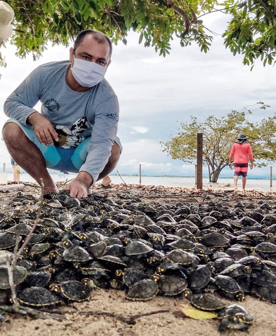 Projeto devolve ao rio mais de 60 mil tartarugas em Terra Santa e Oriximiná