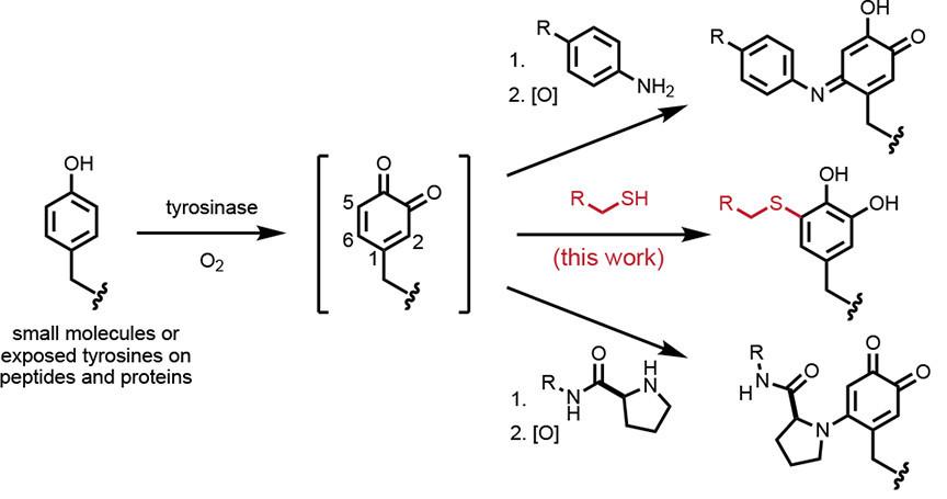 Статья с нобелевским лауреатом acs,chemistry,nobel