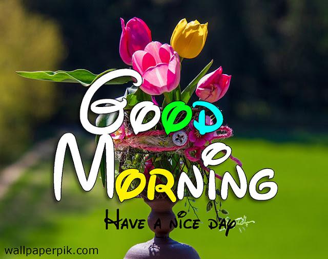 good morning 4k hd images good morning flower images free download