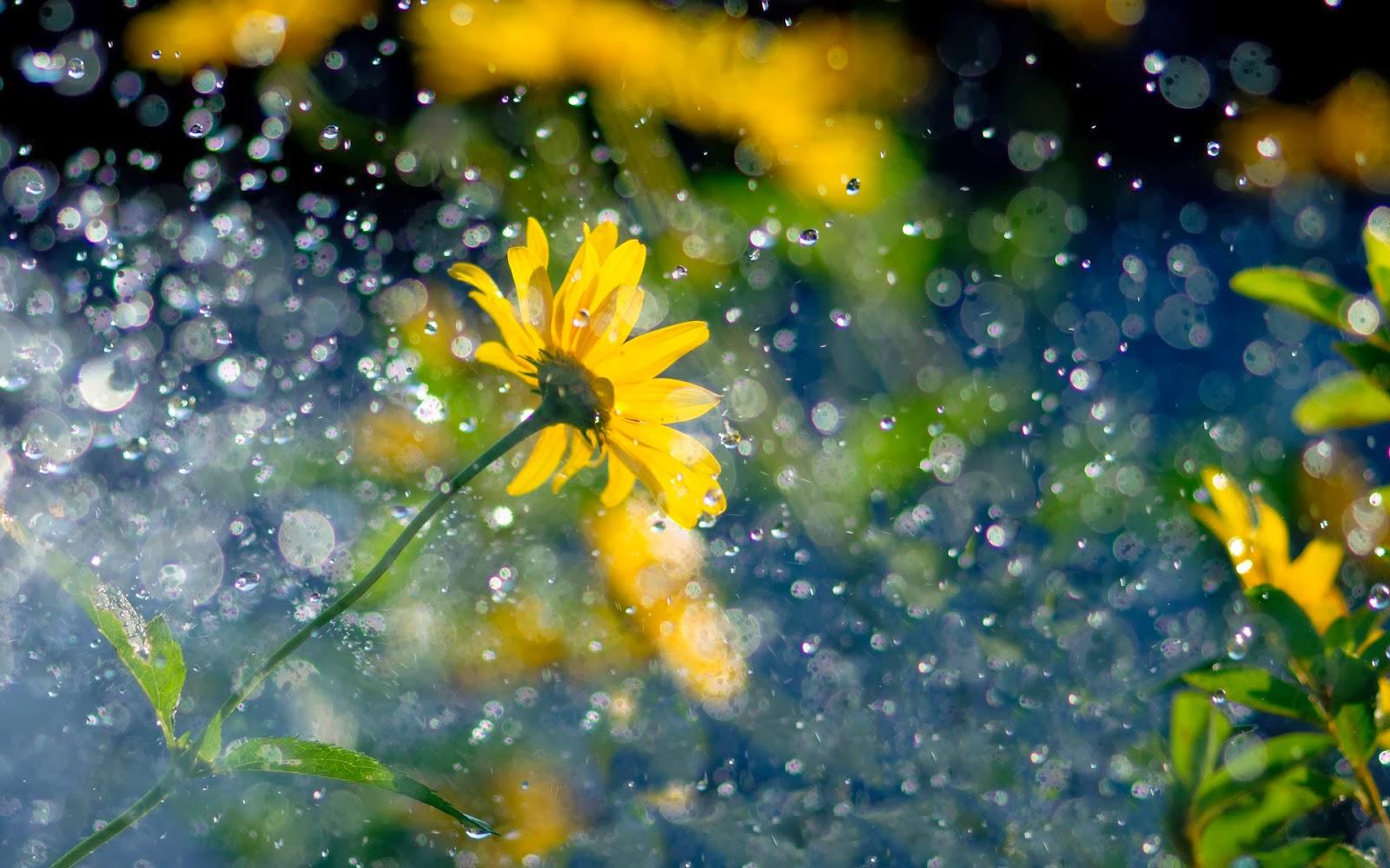 Regen Hd