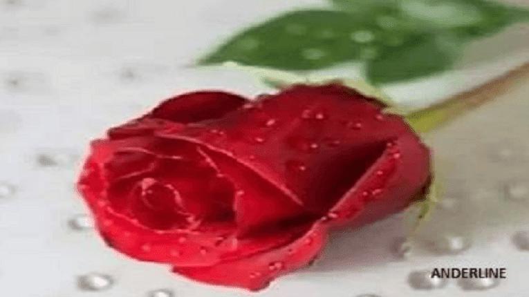 Puisi Cinta Harapan Palsu (ilusi janji)