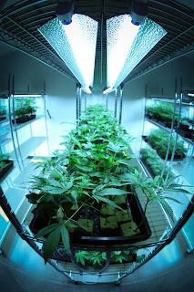 An indoor grow - Photo by Ryan Lange on Unsplash