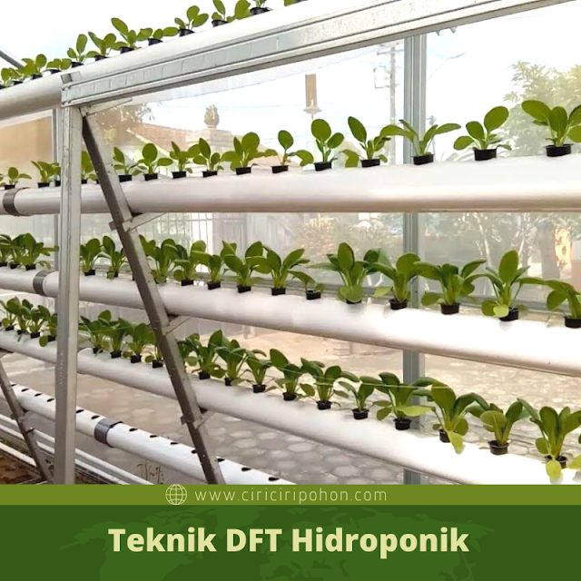 Ciri Ciri Pohon DFT Hidroponik