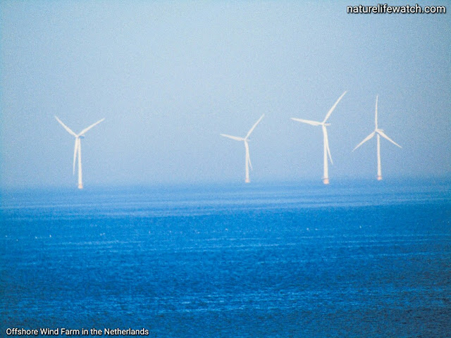 Offshore wind farm in the Netherlands