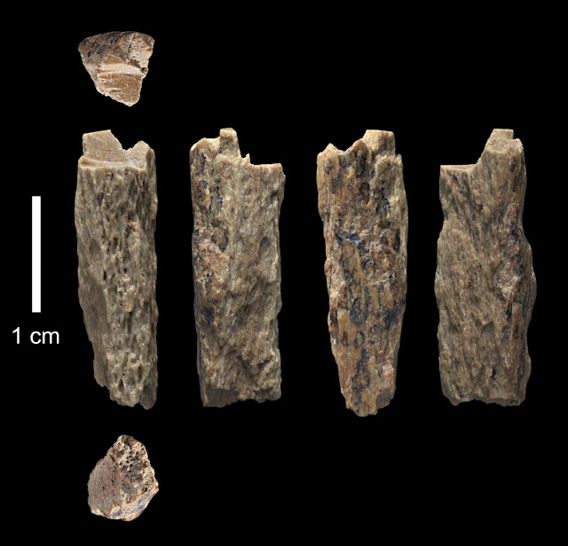 Neanderthal mother, Denisovan father: Newly-sequenced genome sheds light on interactions between ancient hominins