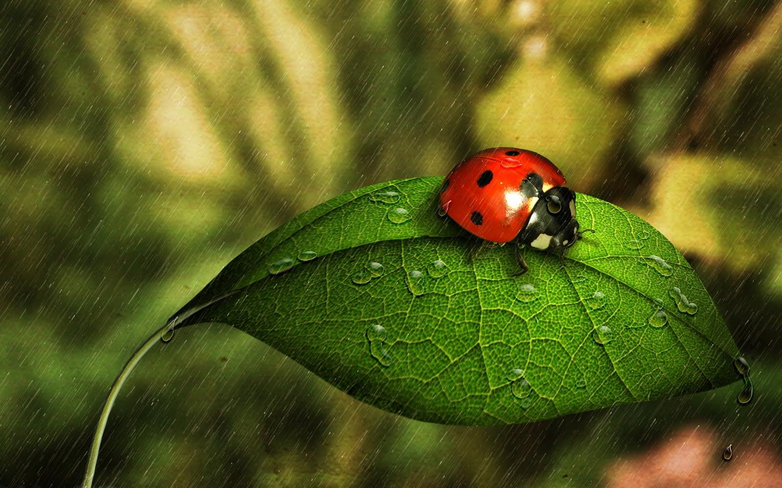 Wallpaper Download Cute Lovers Ladybug Green Leaf Nature Hd Love Wallpaper Love