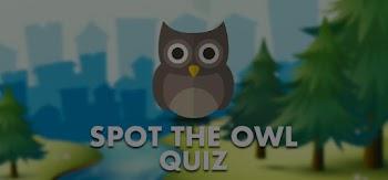 spot the owl quiz answers 100% score quiz diva