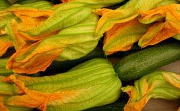 Zucchina con fiore