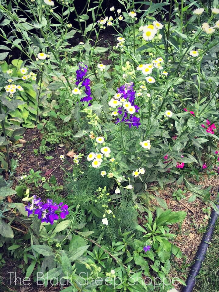 Hints of purple, pink, and yellow are starting to bloom in my wildflower garden.